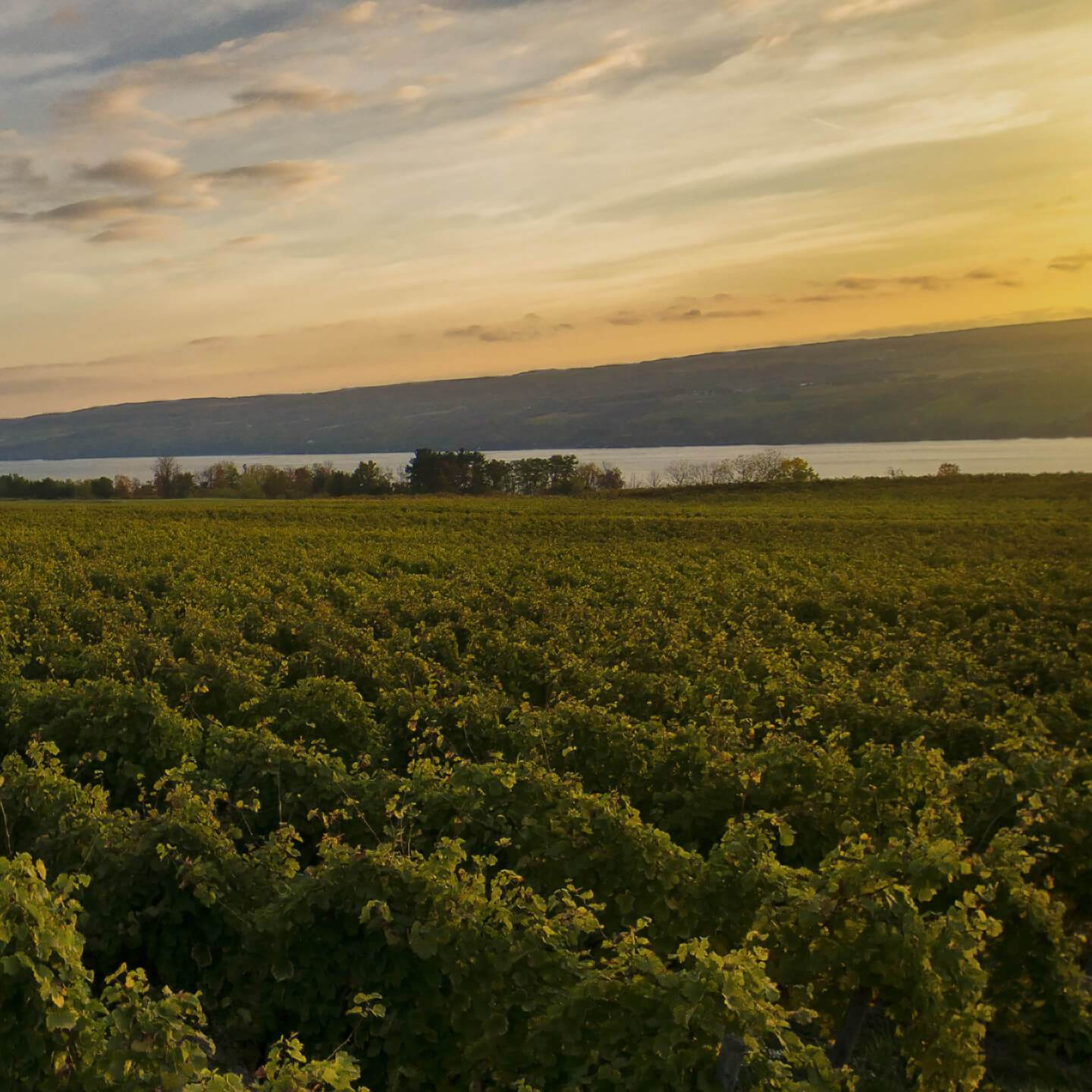 Finger Lakes Winery | Fulkerson Winery & Farms | Dundee, NY
